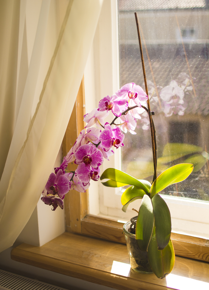 orchids are good for you