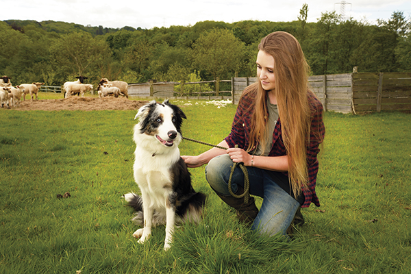 Solo Shepherdess with dog