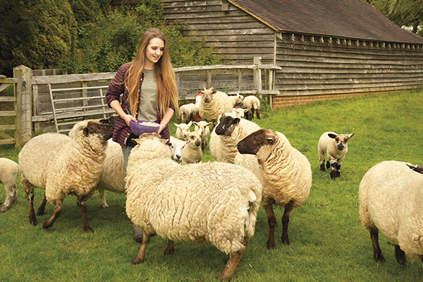 solo shepherdess
