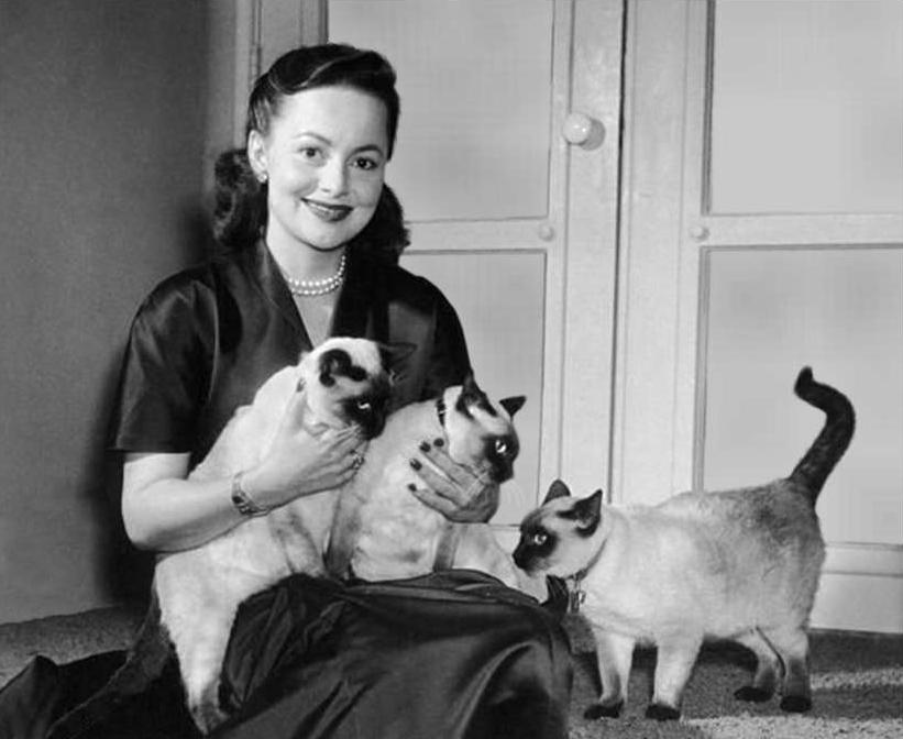 olivia with her cats