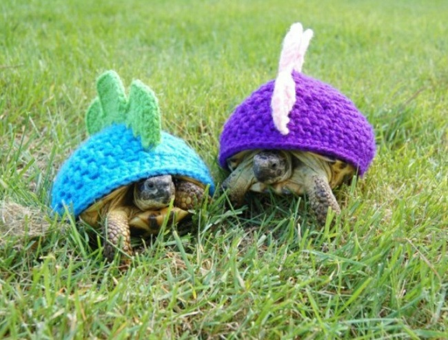 tortoises in jumpers