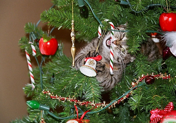 cat eating a candy cane