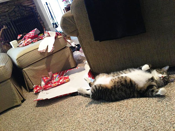 I just couldnt wait cat presents