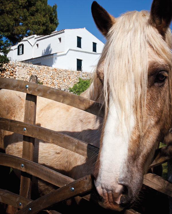 Horse in Menorca