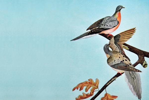 Should we revive the passenger pigeon?