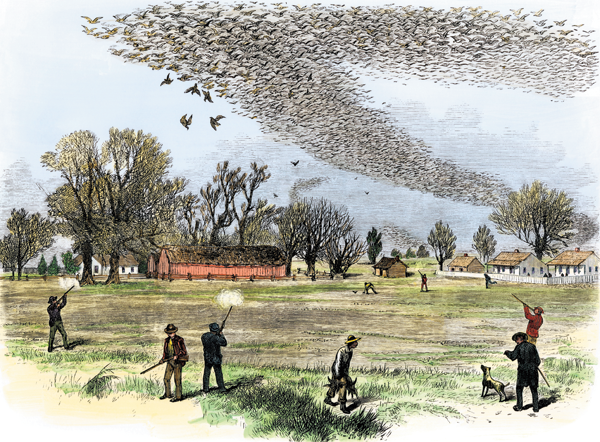 The Passenger Pigeon: Once an Abundant Bird