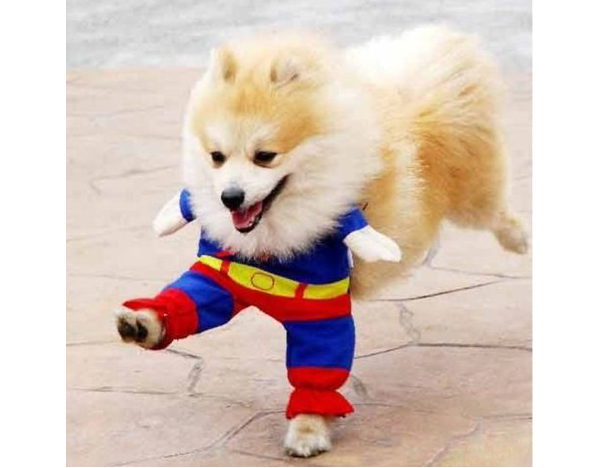 Halloween Super Dog
