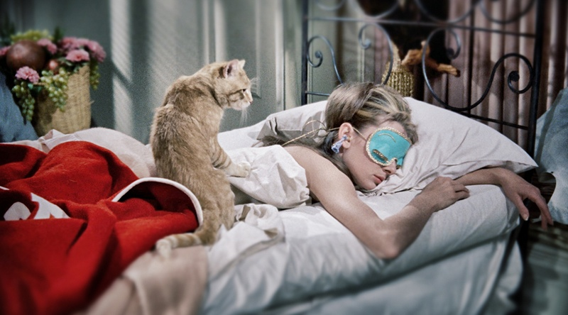 Orangey the cat in Breakfast at Tiffany's