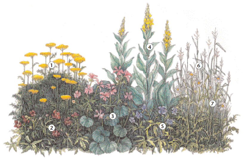 Creating An Easy Care Garden With Wild Flowers Reader S Digest