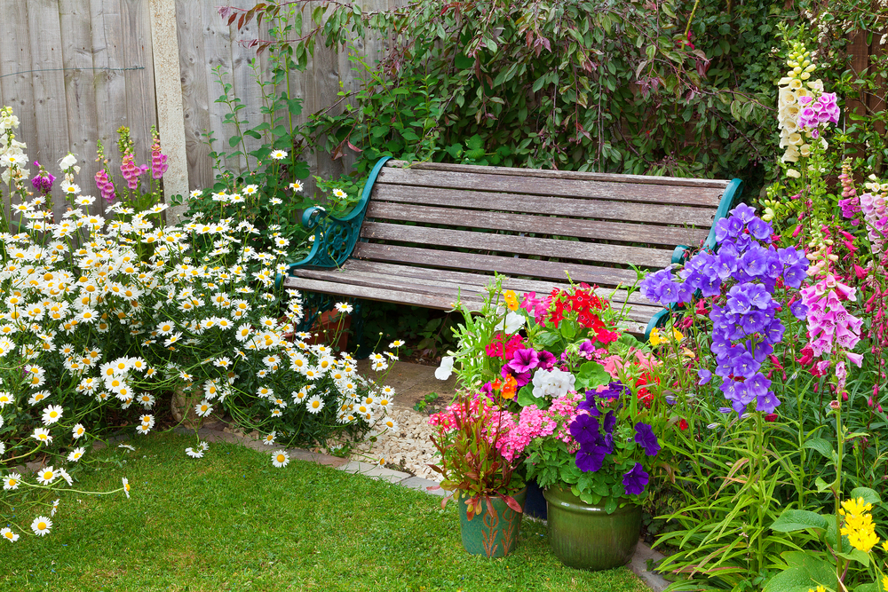 Bedding plants in pots by a bench