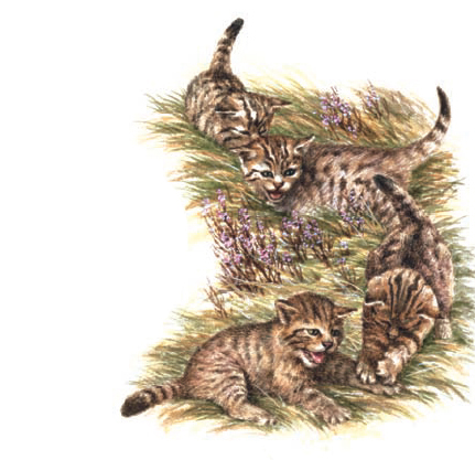 Wild kittens playing