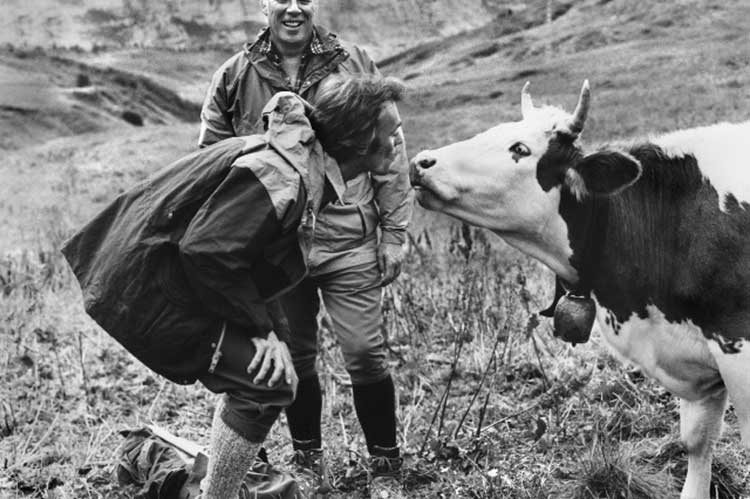 Clint Eastwood kissing a cow