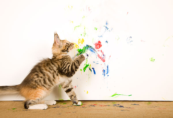 creative painting cat