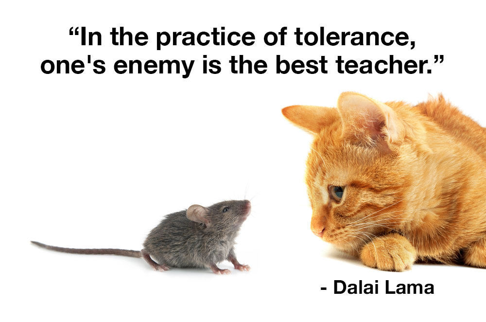 In the practice of tolerance, one's enemy is the best teacher.