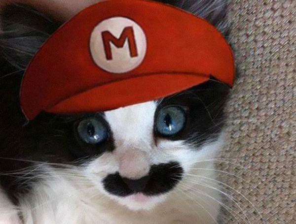Mario Cat & 23 adorable pet costumes - Readeru0027s Digest