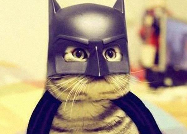 Bat-Cat & 23 adorable pet costumes - Readeru0027s Digest
