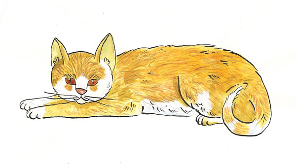 merrick limited ingredient cat food