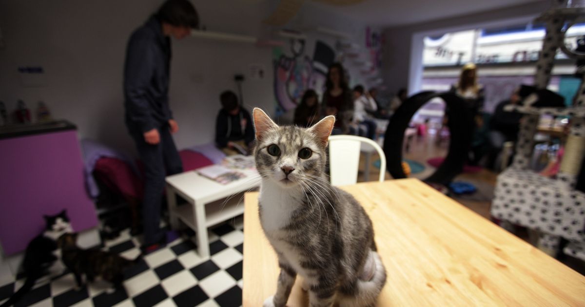 Mog on the Tyne cat cafe UK