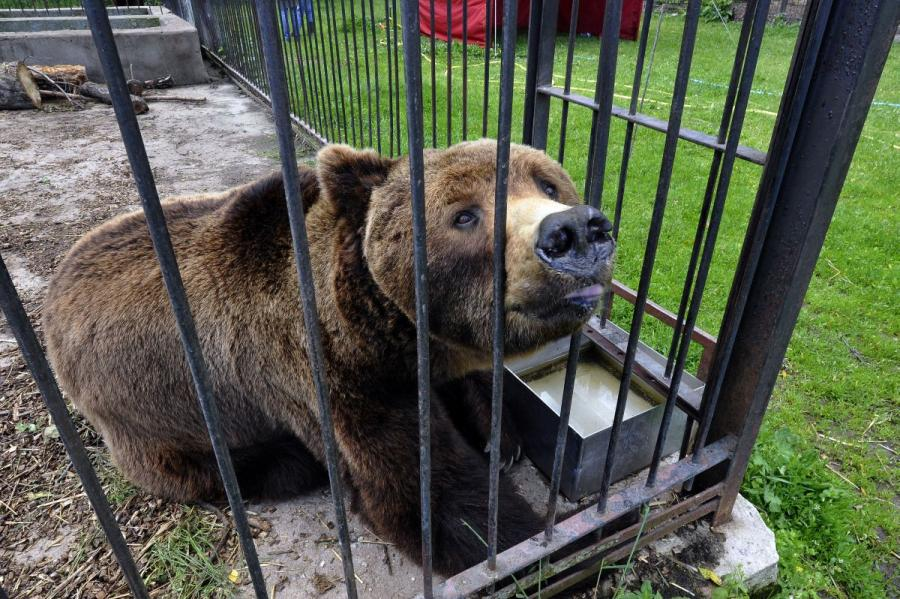 Caged bear rescued by Carsten Hertwig