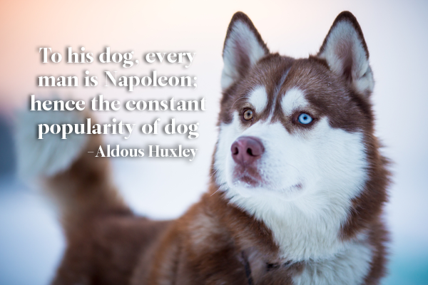 Aldous Huxley Dog Quote