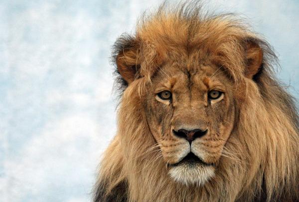 Big Cats Facing Extinction