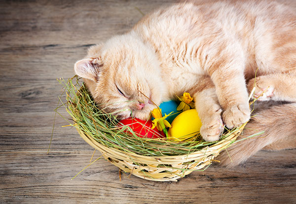 cat easter