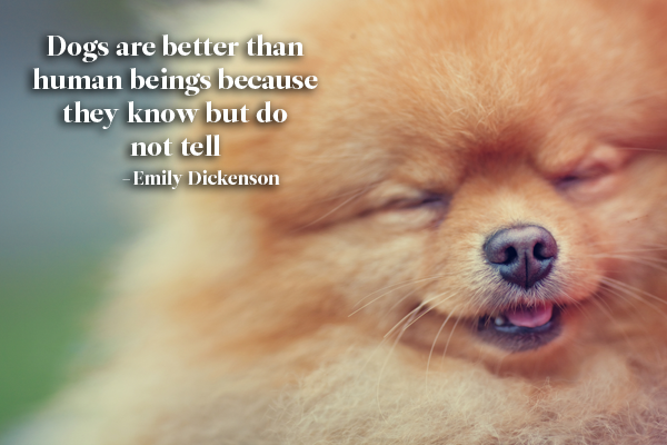 Emily Dickenson Dog Quote