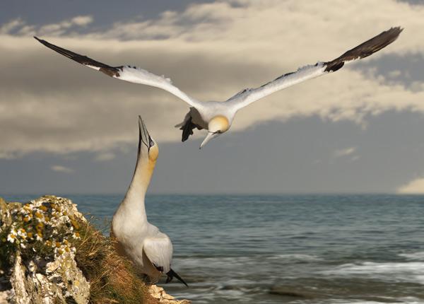 Bird Watching on Rathlin Island