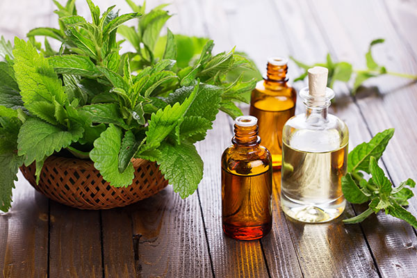 mint essential oils