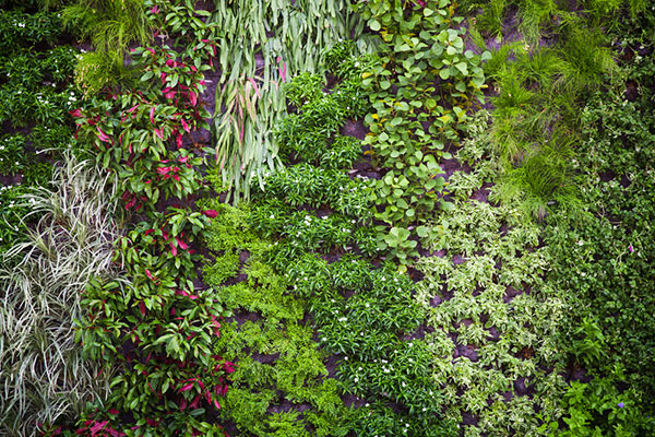 Vertical planting ideas