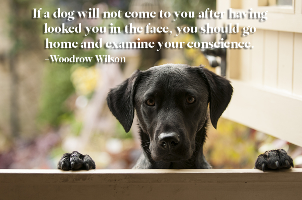 Woodrow Wilson Dog Quote