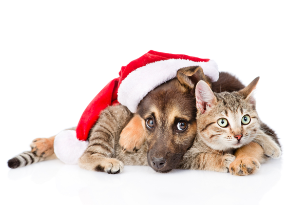 9 Christmas pet gifts | Animals, Christmas | Reader's Digest