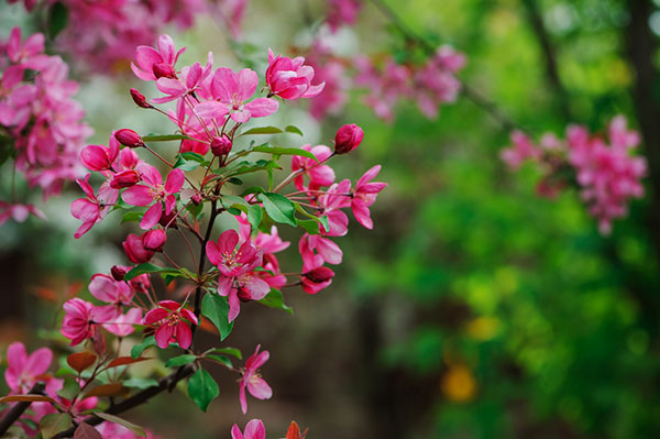 These shrubs will keep your garden gorgeous all year round or small tree with showy yellow flowers with prominent red stamens suitable for a sunny dry garden it is borderline hardy and may not survive a harsh mightylinksfo
