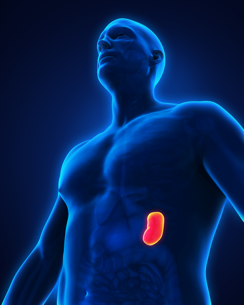 Surprising Facts About Your Spleen Readers Digest