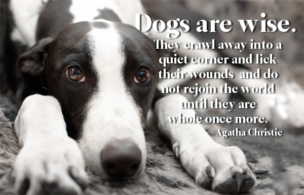 Dog Quote Agatha Christie