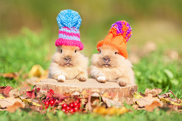 chilly bunnies