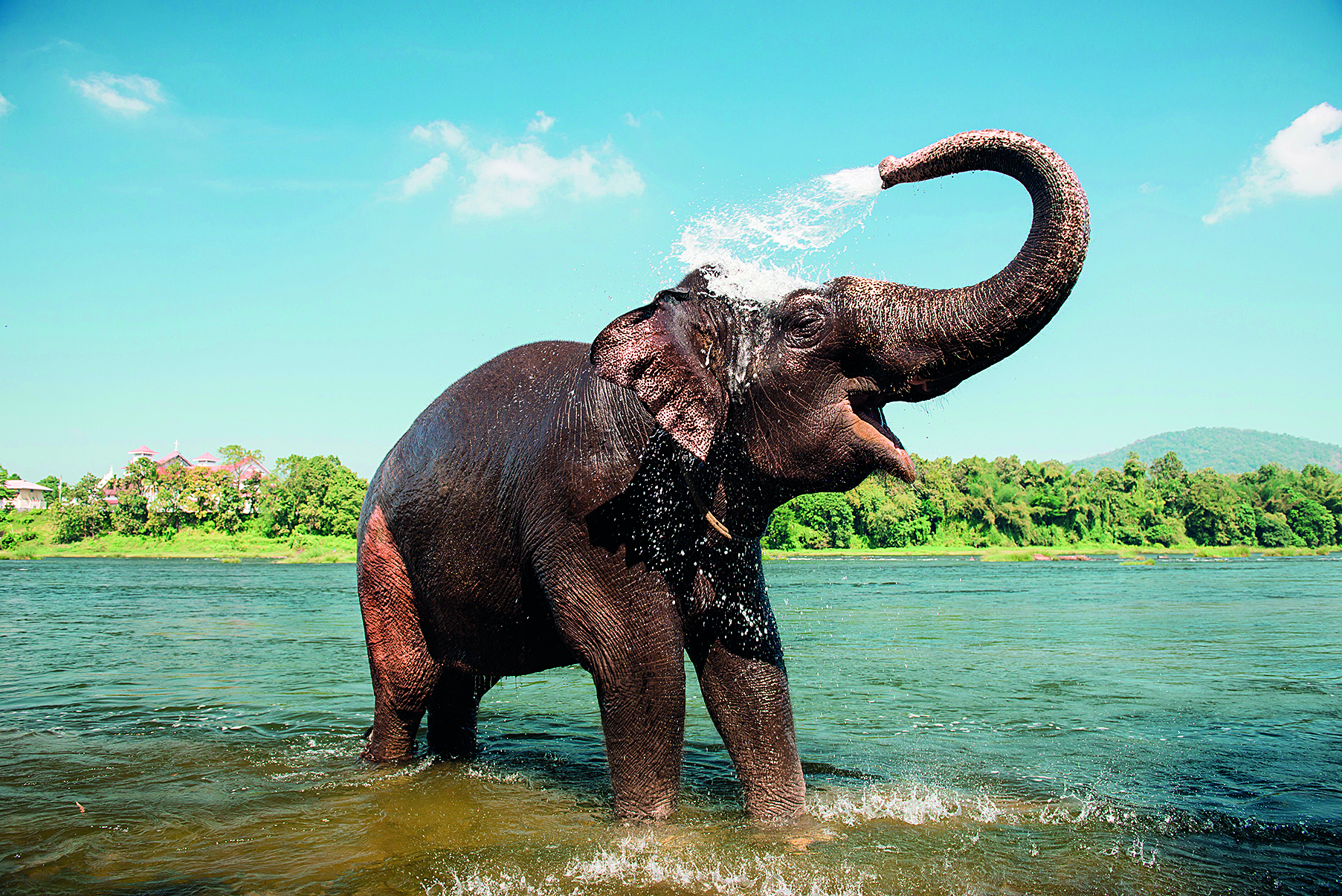 kerala water elephant splash